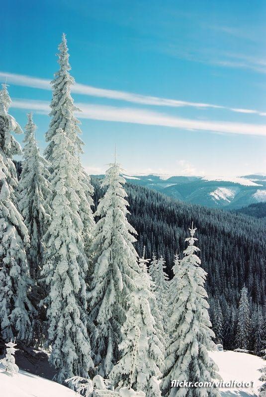 Зимова картинкаphoto preview