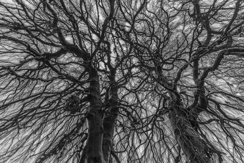 лес, деревья, ветки, небо, кружево Хитросплетения.photo preview