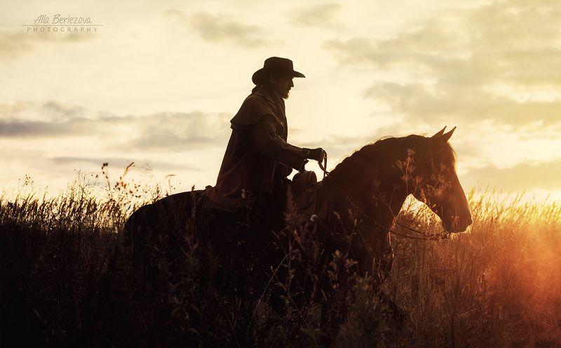 cowboy, sunset, field, sunlight, horse, draft ***photo preview