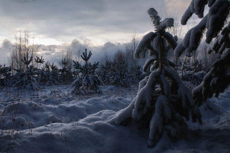 брянск, зима, снег, лес, алексей платонов Зимний вечерphoto preview
