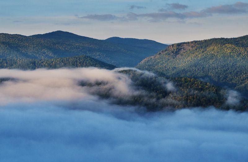 туман, лес, тайга, лето О туманахphoto preview