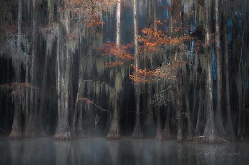 cypress swamp Заколдованный лесphoto preview