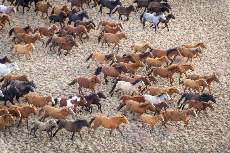 казахстан, сары-арка, степь, сайга, сайгаки, лошади, девочка, пес, кот, озеро, озёра, Сары-Аркаphoto preview