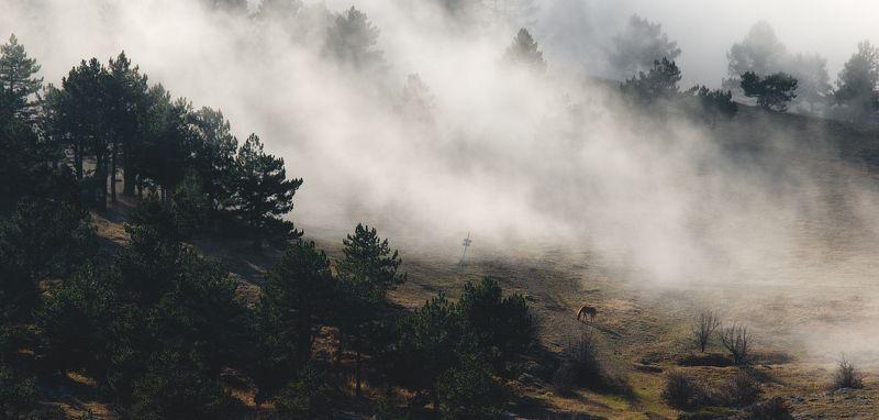 крым, рассвет, туман, облака, лес, sunrise, fog, clouds, forest, trees photo preview