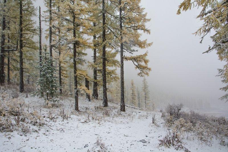 алтай,осень у леса на опушке...photo preview
