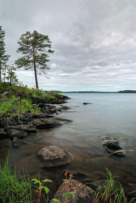 карелия, охта, белые, ночи, сосна, озеро Белые ночи на озере Муезероphoto preview