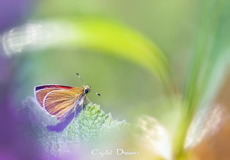 crystal dreams, macro, summer, color, art, nature, butterfly My color worldphoto preview