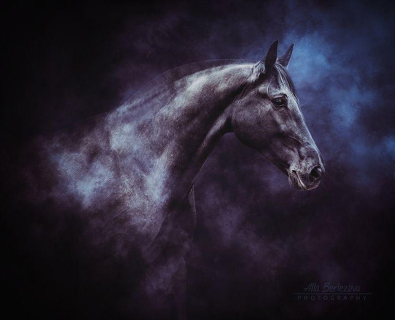 лошадь, лошади, свет, андалуз, horse, horses, light, andalusian ***photo preview