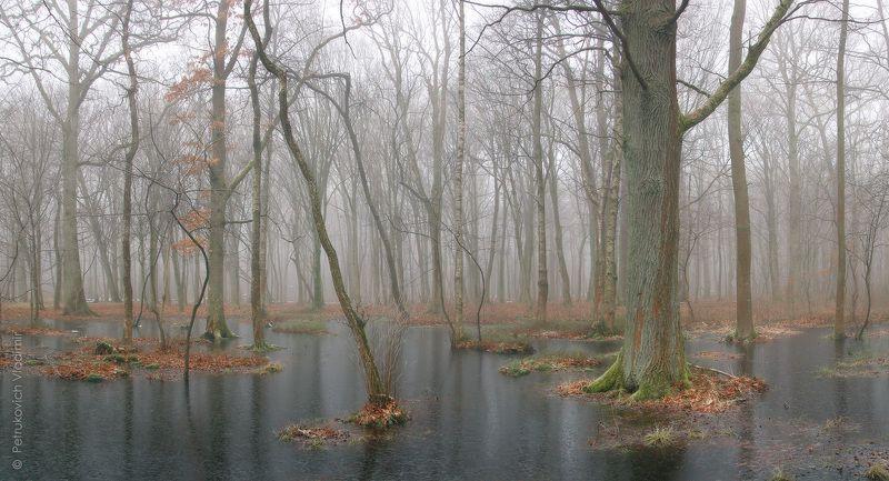 лес, туман, вода, лёд Лес на чёрной водеphoto preview