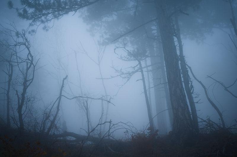 крым, лес, туман, осень, forest, fog, autumn photo preview
