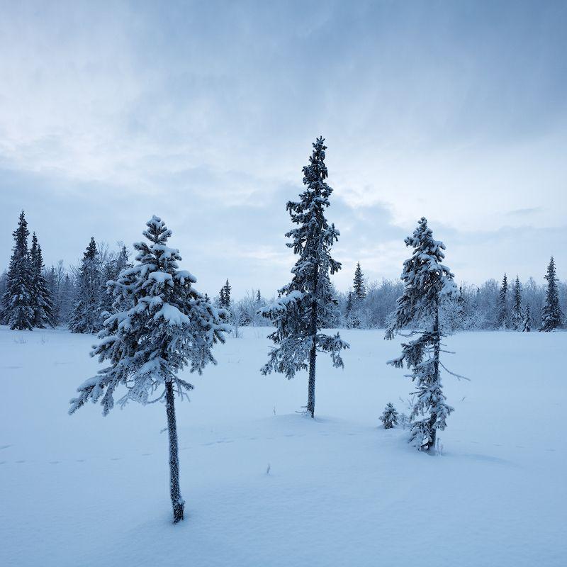 зима, снег, ель 3photo preview