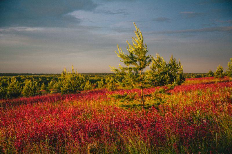 иваново. ивановская область, закат, Россия  Цветочные лугаphoto preview