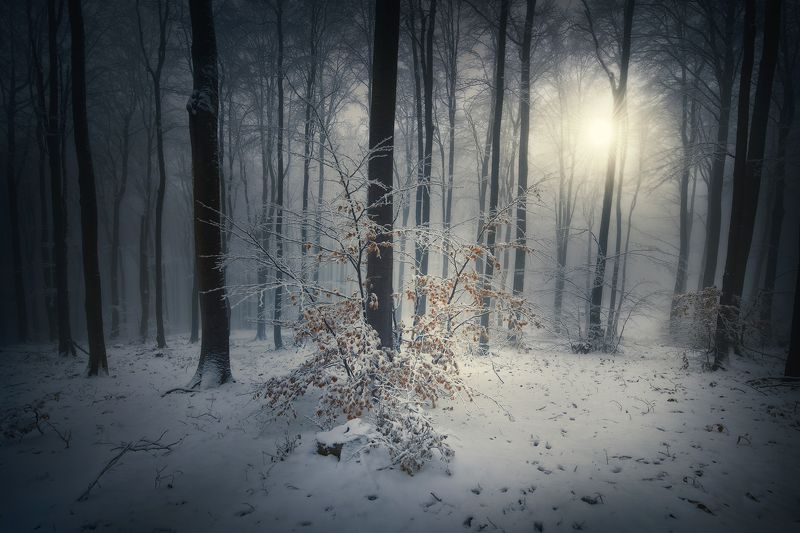 nature, landscape, forest, fog, snow Winter autumnphoto preview