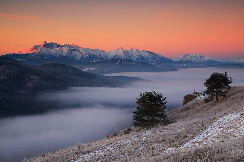 tatras, mountains, sunrise, winter, mist, mood, photographer, man, color, view, snow, slovakia Orangephoto preview
