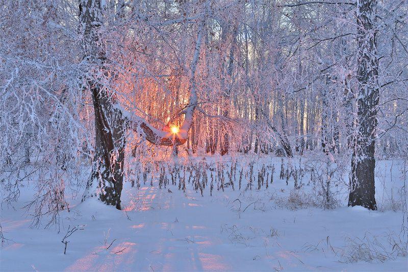 зима, лес, иней, деревья, вечер, солнце, закат Зимний вечерphoto preview