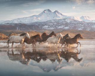 Land of beautiful horses