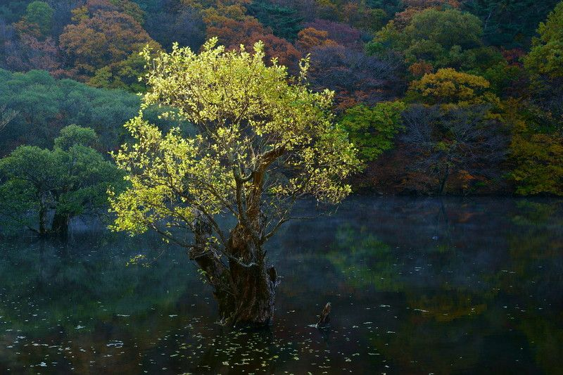 korea,gyeongsangbukdo,autumn,morning,light,reservoir,tree,reflection,mountain Morning lightphoto preview