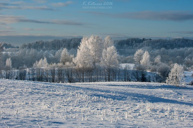 snow frost forest tree blue white winter sky clouds latvia landscape field sun day light cold The White Scapephoto preview