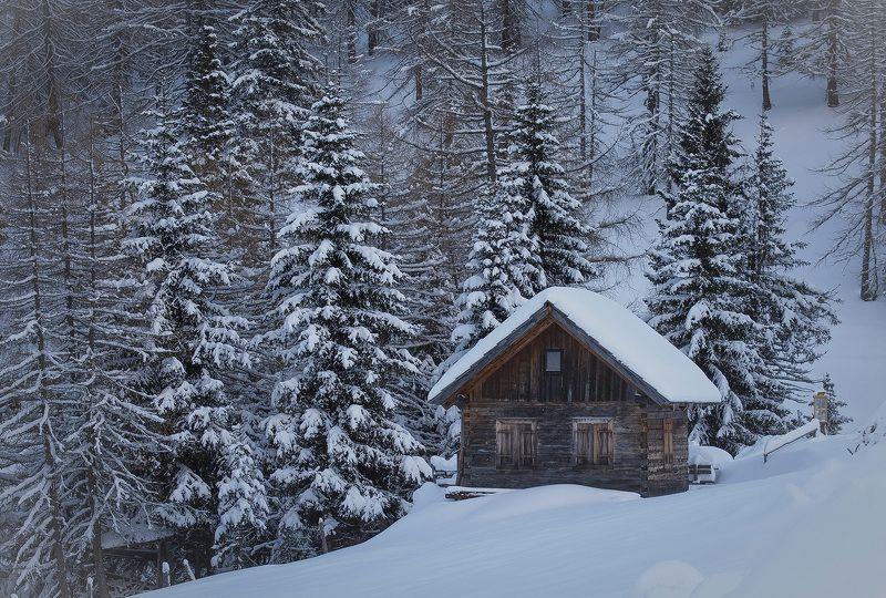 winter Winter dreamsphoto preview