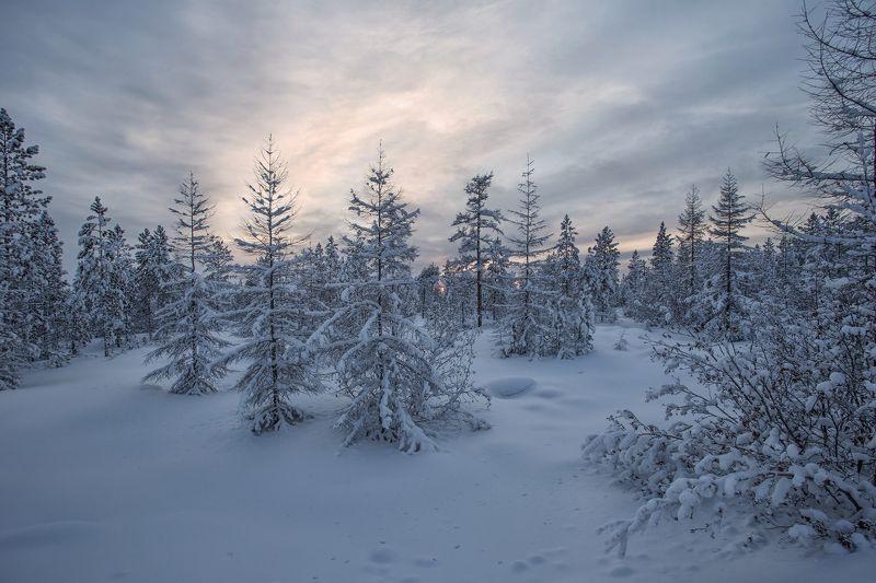якутия, нерюнгри, зима Январский вечерphoto preview