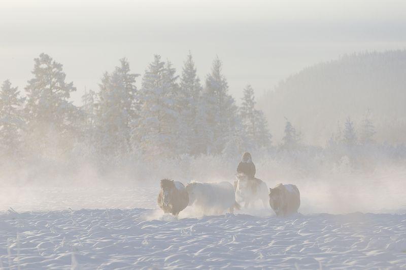 природа,север, сибирь, якутия, оймякон, полюс холода, зима, мороз, холод, лошади Жизнь  на севереphoto preview