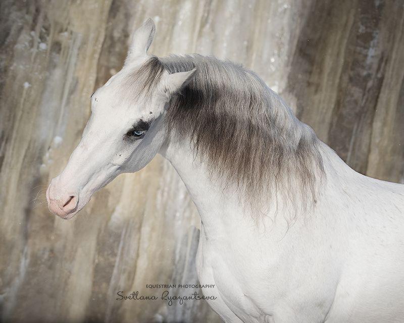 horse, лошадь, лошади, details, portrait Зефирныйphoto preview