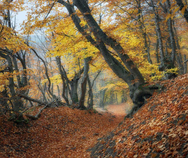 лес, осень, бук Осенними тропамиphoto preview
