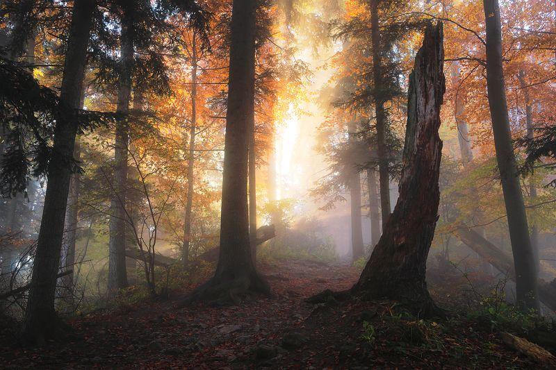 forest, trees, mist, mood, sunrise, light, autumn, Explosionphoto preview