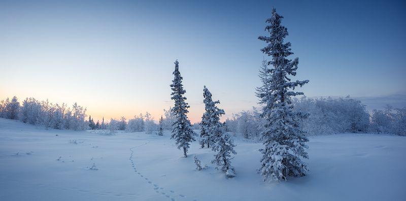 зима, снег, ель Северная рассветнаяphoto preview