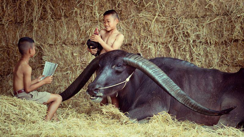 life,portrait,children,buffalo,bull,Thailand. Kids and Bull photo preview