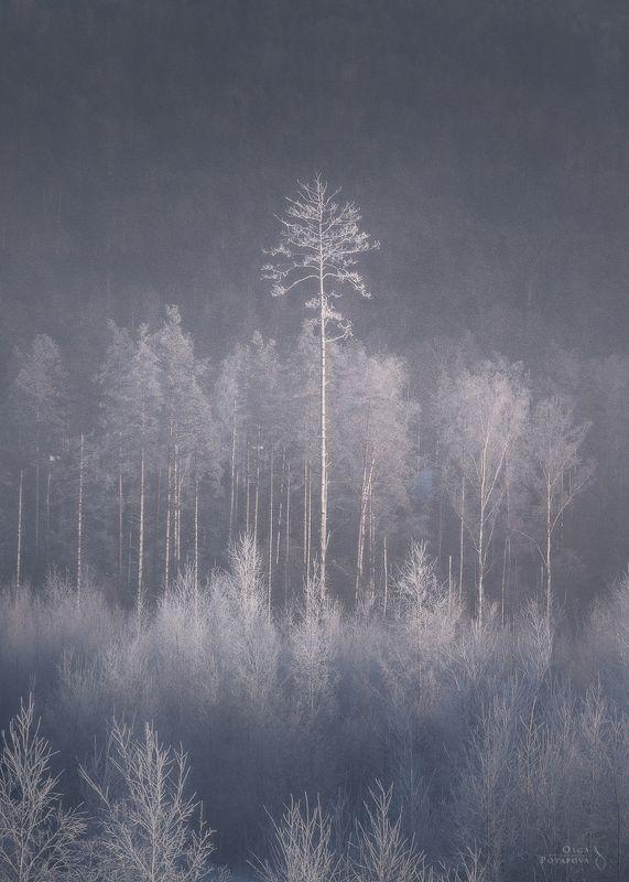 январь, зима, иней, снег, воздух, эфир, волшебство, ленинградская область, игора, карельский перешеек, лес, сосна, деревья, туман, дымка Эфирphoto preview