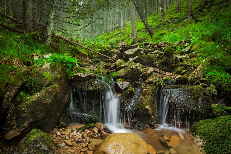 carpathians, ukraine, springs, water, forest, trees, nature, landscape, mountains, backpack, ручей, карпаты Carpathian Springsphoto preview
