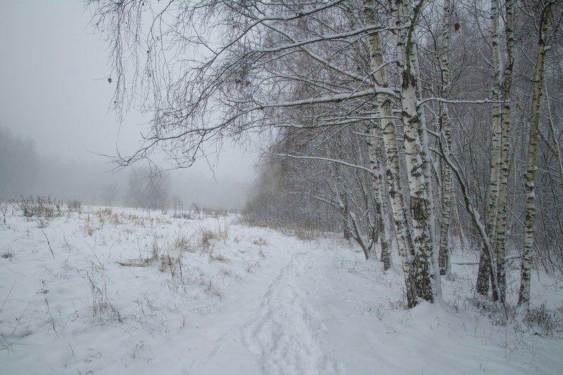 Зима, туман, лес, снег, москва, парк Зима photo preview