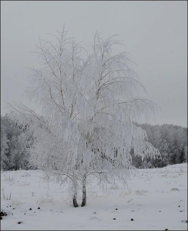 Россия,зима,снег На просторах Россииphoto preview