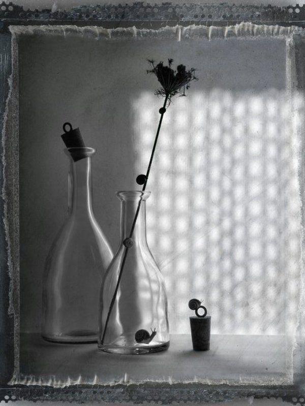 улитки, стекло За стекломphoto preview