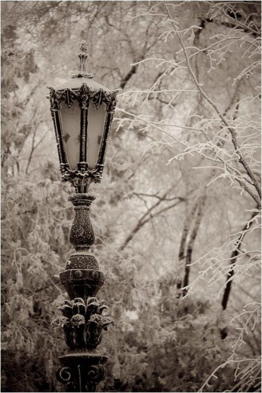 одесса,соборка ,фонарь, изморозь Изморозьphoto preview