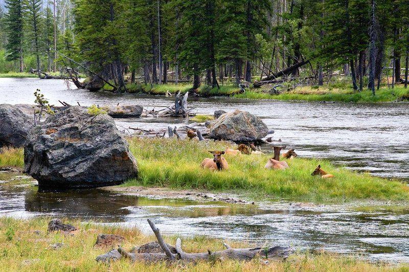 природа, река, горы, олени, животные Семейнаяphoto preview