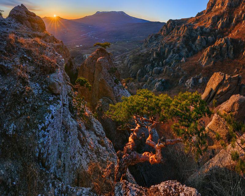 крым, долина приведений, демерджи, алушта, лучистое, сосна Вечернее созерцание бонсая в Долине Привиденийphoto preview