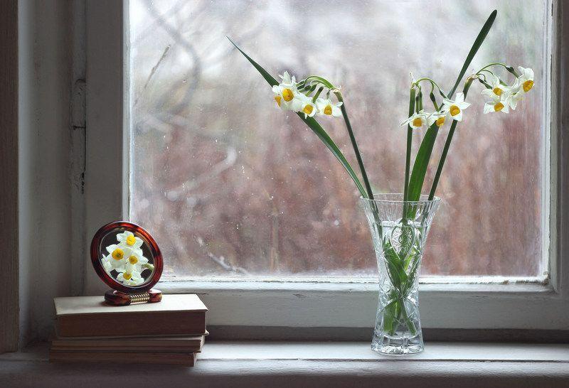 Январь нарциссы Январь в Ялтеphoto preview