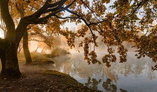 Про осень , свет и туман
