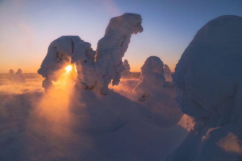Лапландия, Финляндия, снег, ветер, холод, лед, солнце, луч, линии, сугробы, деревья, лес, путешествия, закат, восход, lights, snow, trees, forest, hills, mountains, lapland, explore, outdoore, sun, sunlight Белое безмолвиеphoto preview
