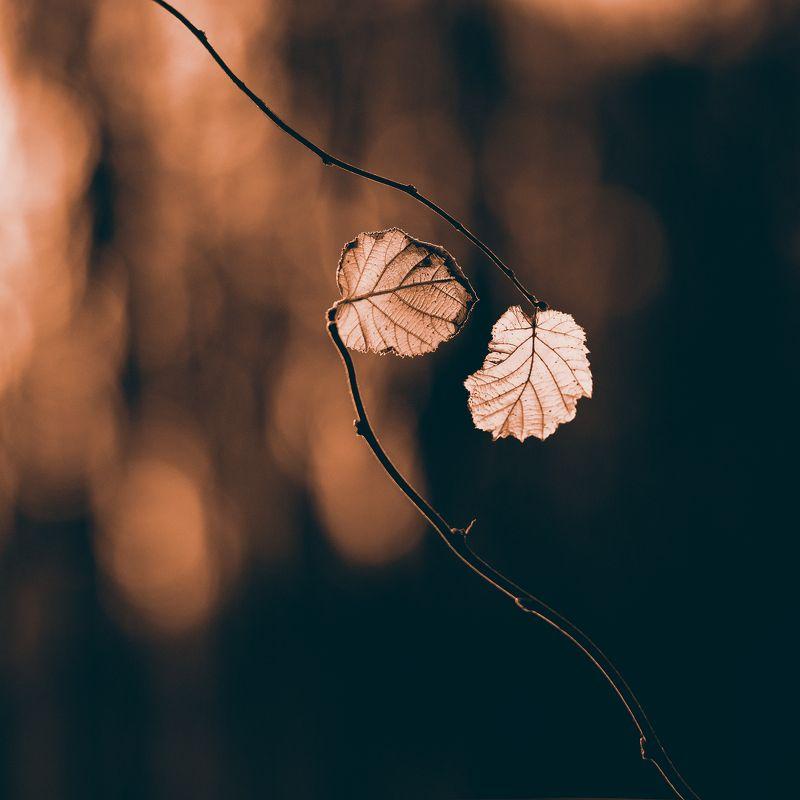 Осенняя любовьphoto preview