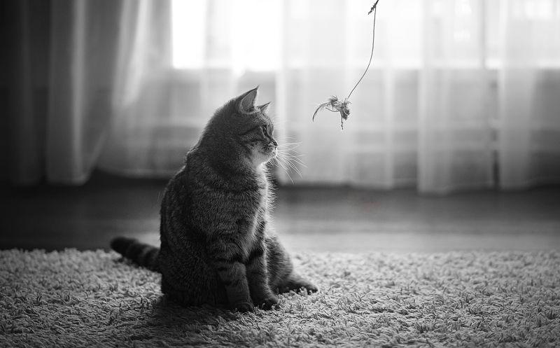 История котятки. Продолжениеphoto preview