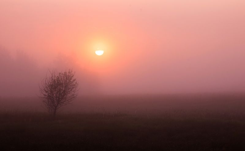 утро, туман, рассвет, природа, пейзаж, Ранним утромphoto preview