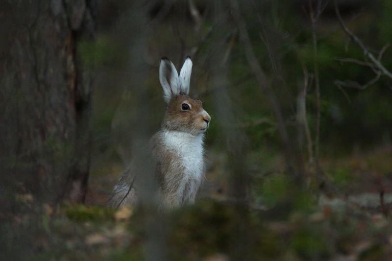 природа, животные, заяц заяцphoto preview