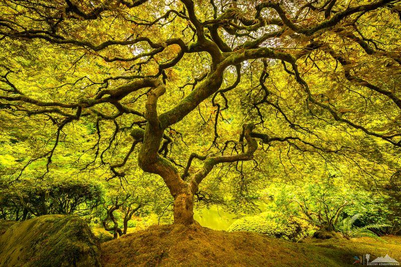 Волшебное деревоphoto preview