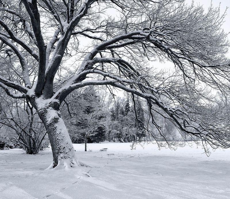 winter,tree,sky,snow,landscape,nature,park, Treephoto preview