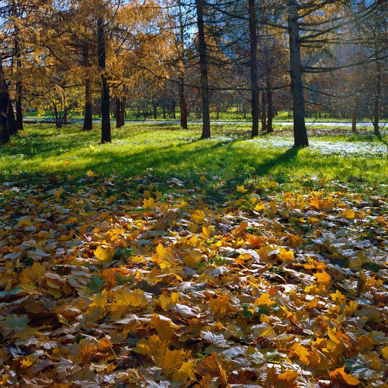 парк., осень., солнце., листья. \