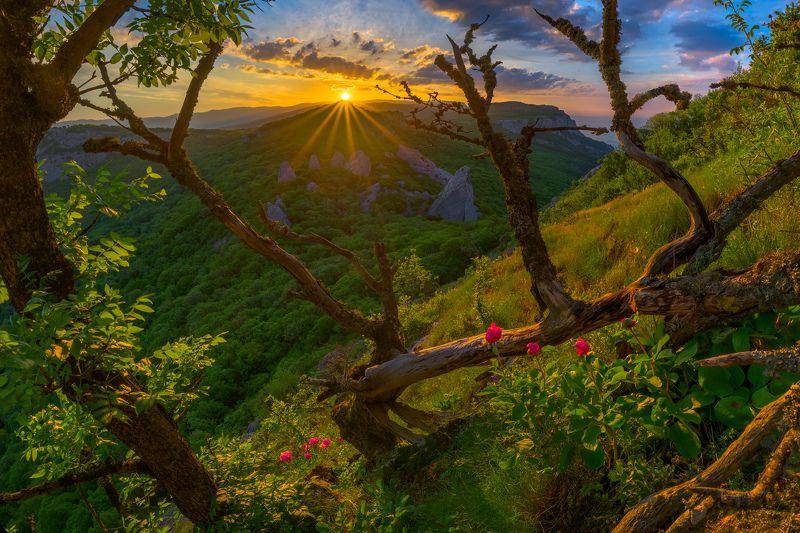 крым, храм солнца, ильяс-кая, пион, весна, Волшебный цветокphoto preview