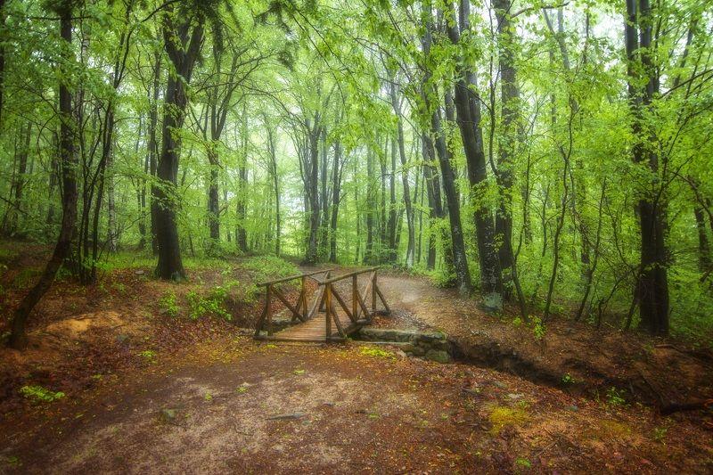 landscape Някъде из Витошаphoto preview